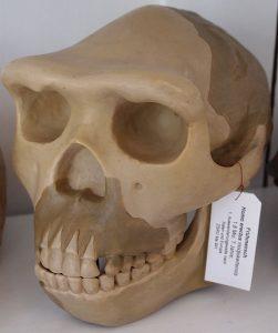 -1 млн. лет до н. э. Питекантроп обитал на территории современного острова Ява