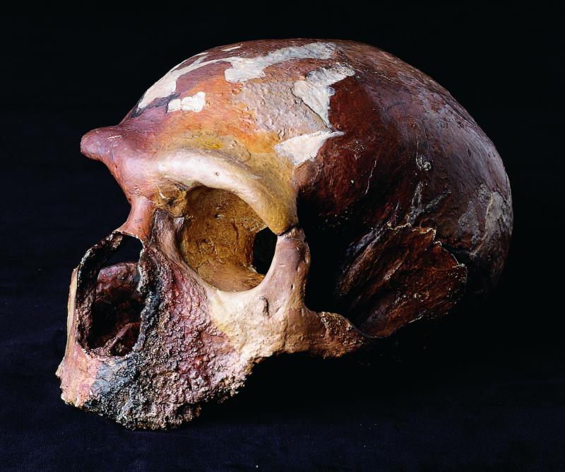 -60 000 лет до н.э. Неандерталец поклонялся человеческому черепу